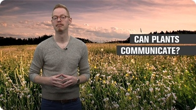 Can Plants Communicate?