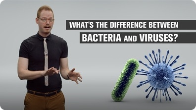 What's the Difference Between Bacteria and Viruses?