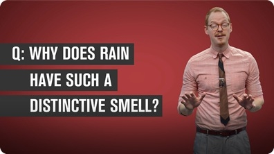 Why Does Rain Have a Distinctive Smell?