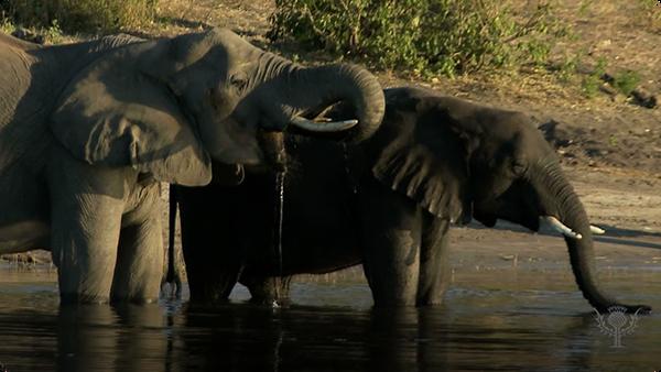 Did You Know: Elephants