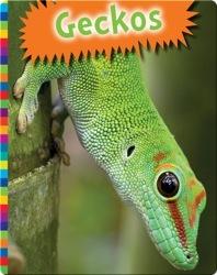 Geckos