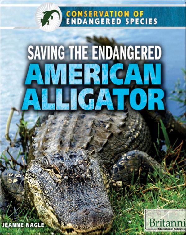 Saving the Endangered American Alligator