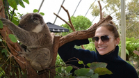 Why is this Koala Australia's Celebrity Magnet?