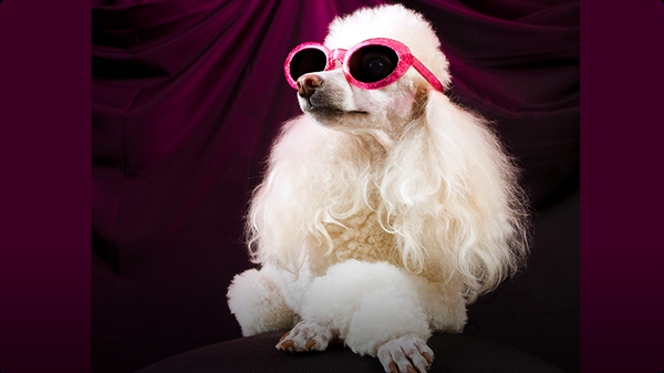 Could Your Pet Be a Film Star?