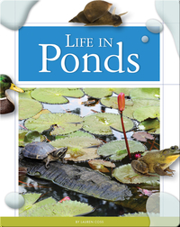 Life in Ponds