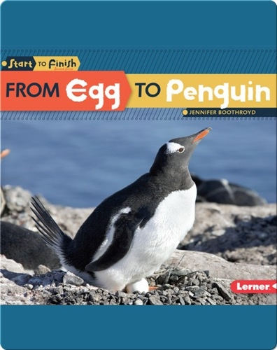 From Egg to Penguin