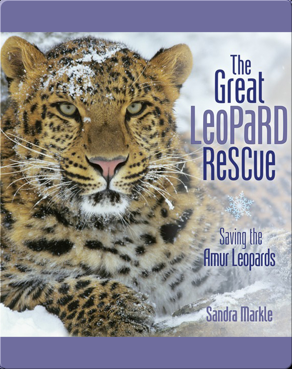 The Great Leopard Rescue: Saving the Amur Leopards