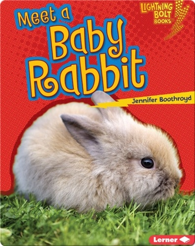 Meet a Baby Rabbit