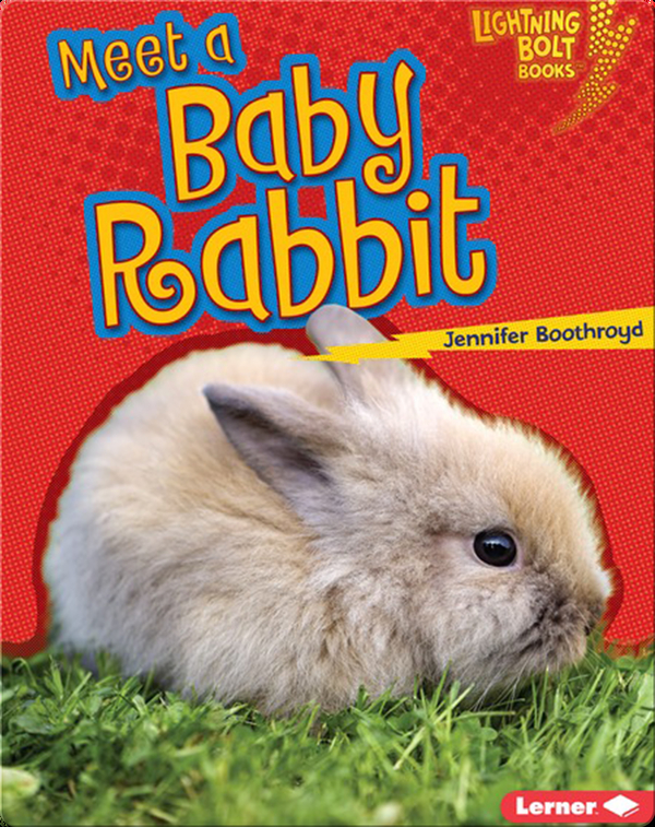 Meet a Baby Rabbit