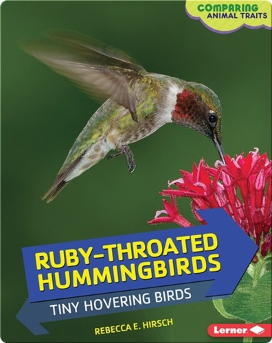 Ruby-Throated Hummingbirds: Tiny Hovering Birds