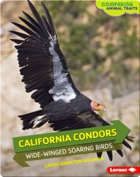 California Condors: Wide-Winged Soaring Birds
