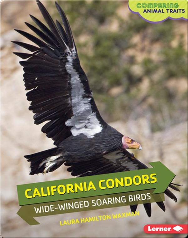 California Condors: Wide-Winged Soaring Birds