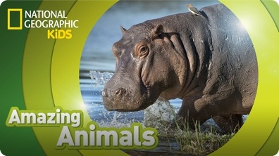 Amazing Animals: Hippo