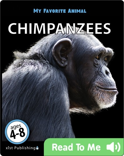 My Favorite Animal: Chimpanzees