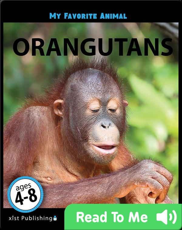 My Favorite Animal: Orangutans