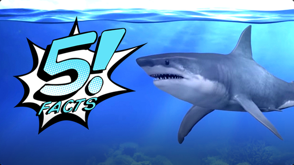 5 Facts About Sharks That Will Make Your JAWS Drop | 5 FACTS