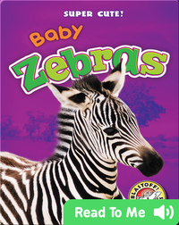 Super Cute! Baby Zebras