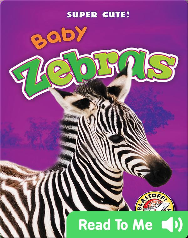 Super Cute! Baby Zebras