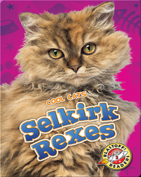 Cool Cats: Selkirk Rexes