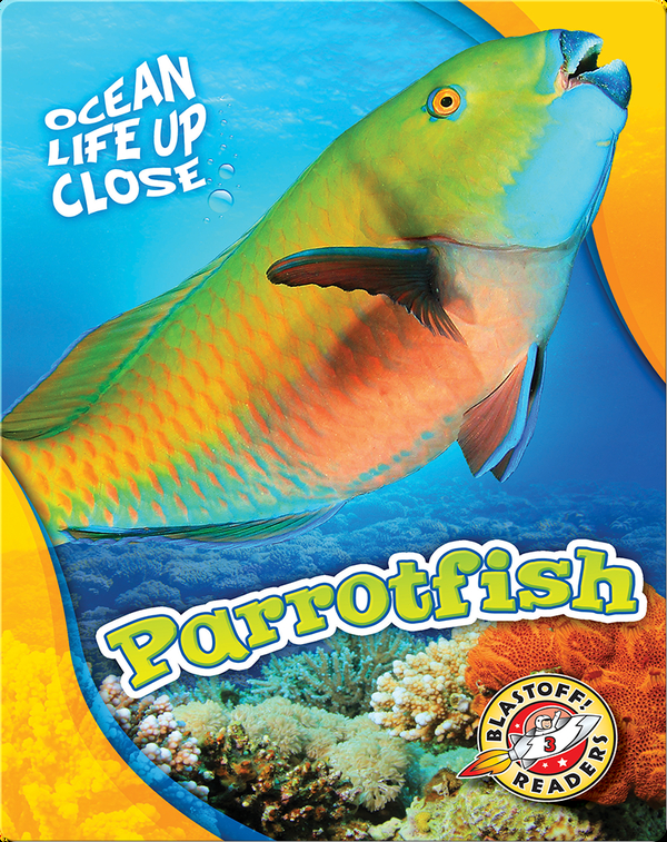 Ocean Life Up Close: Parrotfish