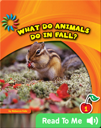 What Do Animals Do in Fall?