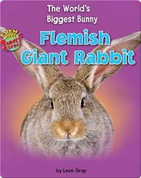 Flemish Giant Rabbit