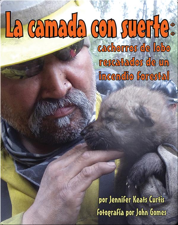 La camada con suerte: cachorros de lobo rescatados de un incendio forestal