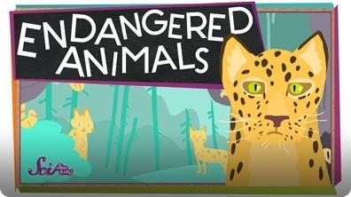 SciShow Kids: Endangered Animals!