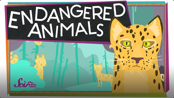 SciShow Kids: Endangered Animals!