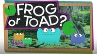 SciShow Kids: Frog or Toad?