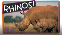 SciShow Kids: Save the Rhinos