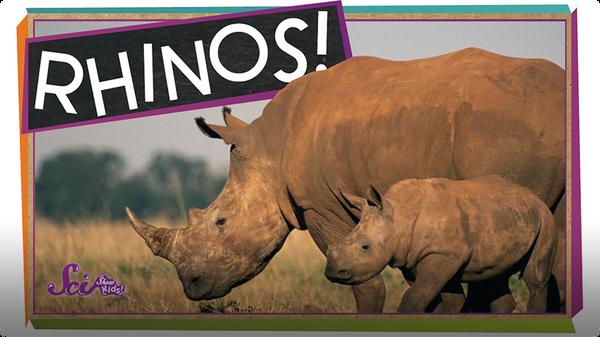 SciShow Kids: Save the Rhinos
