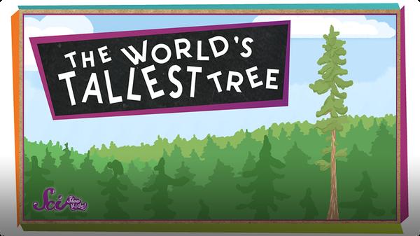 SciShow Kids: The World's Tallest Tree