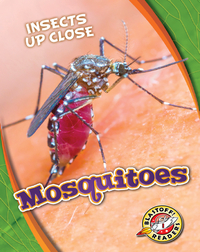 Insects Up Close: Mosquitoes