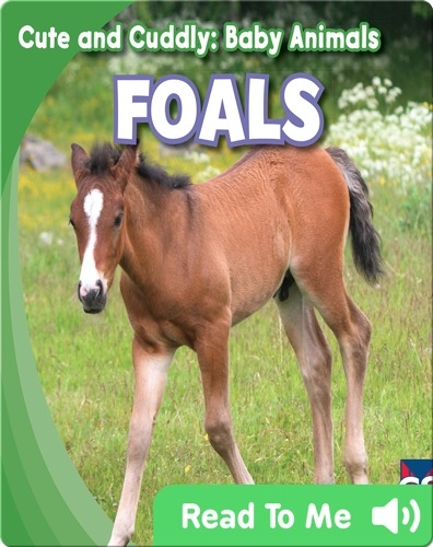 Cute and Cuddly: Foals