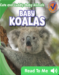 Cute and Cuddly: Baby Koalas
