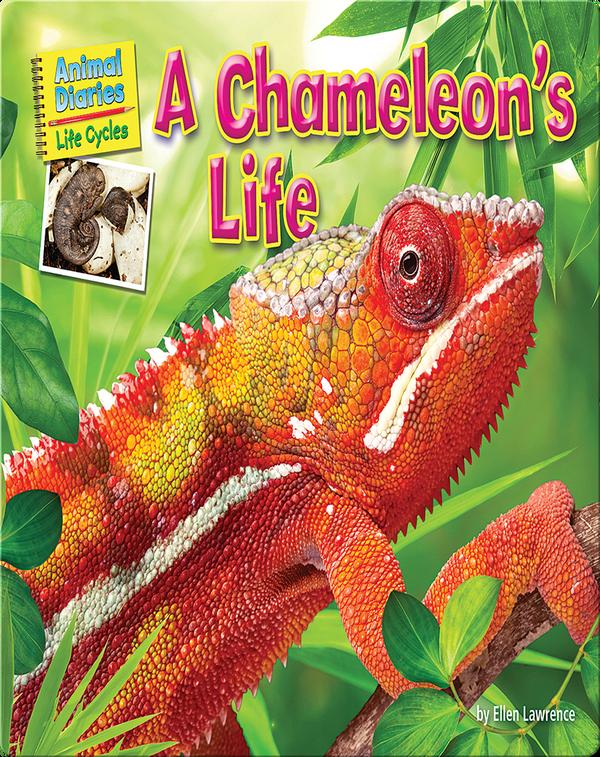 A Chameleon's Life