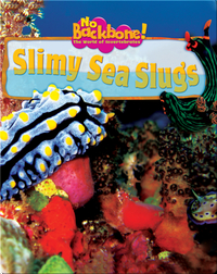 Slimy Sea Slugs