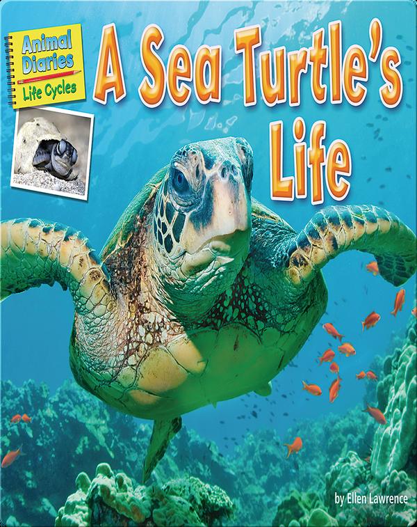 A Sea Turtle's Life