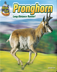 Pronghorn: Long-distance Runner!