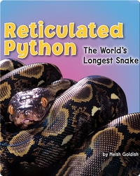 Reticulated Python: The World's Longest Snake