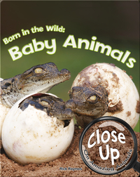 Born in the Wild: Baby Animals