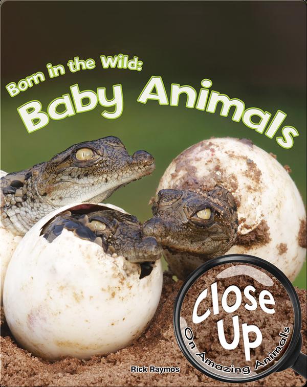 Born in the Wild: Baby Animals