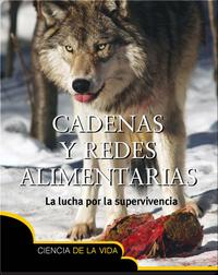Cadenas y redes alimentarias (Food Chains and Webs)
