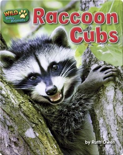 Raccoon Cubs