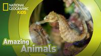 Amazing Animals: Seahorse