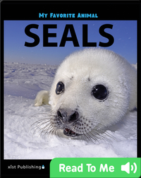 My Favorite Animal: Seals