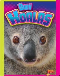 Baby Koalas