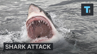How To Not Be Attacked By A Shark