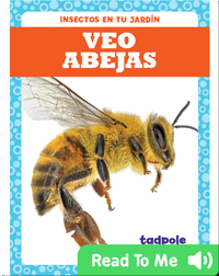 Veo abejas (I See Bees)